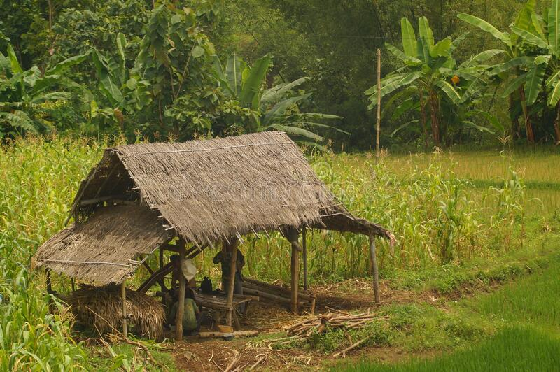 A small hut is a temporary house. With thatched roofs to shelter from the sun and rain royalty free stock photography