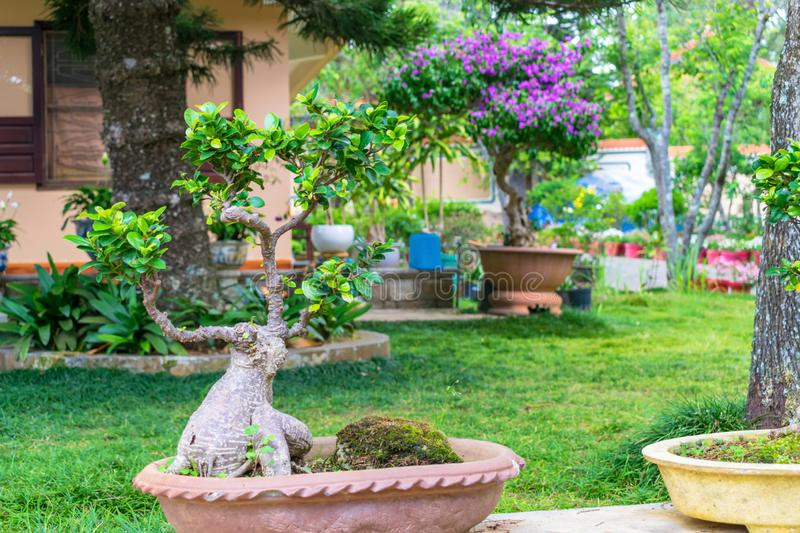 Small ikebana tree in a pot with an amazing trunk in the park royalty free stock photos
