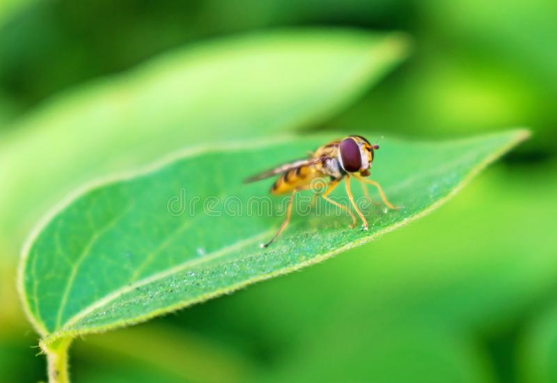 A small insect - bee or wasp on a green leaf stock image
