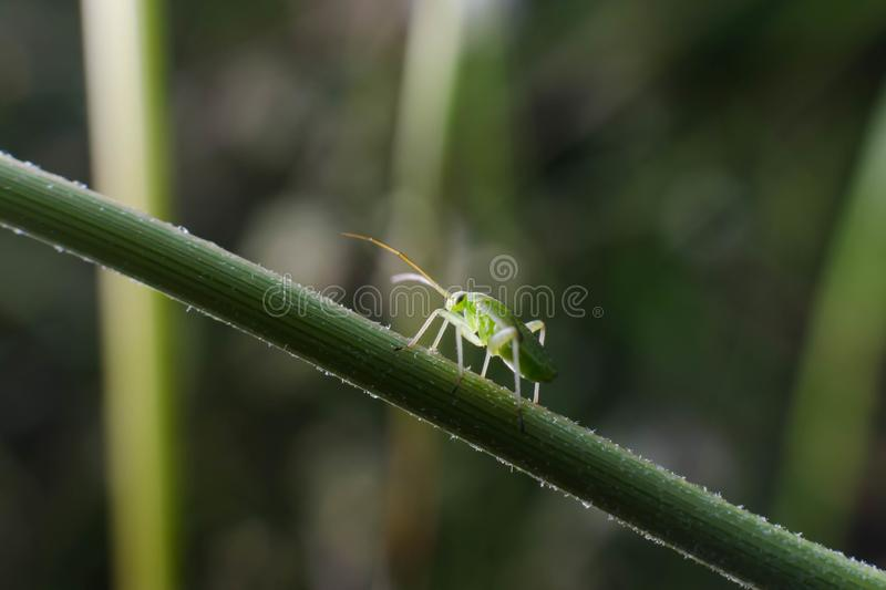 Small insect on the stick of a daisy stock photo