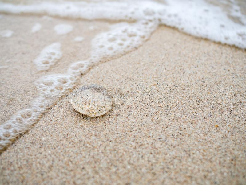 Small jelly fish on the sand beach stock photo