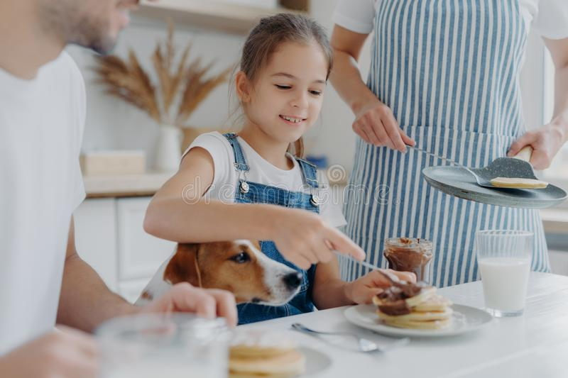 Small kid, her father and dog sit together at kitchen table, eat freshly prepared pancakes, mother in apron stands near holds pan royalty free stock photography