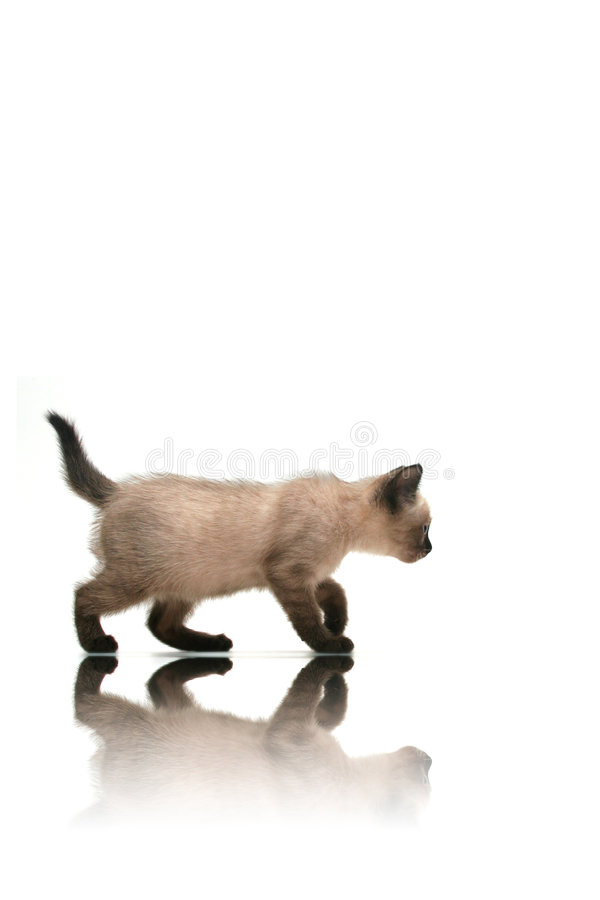 Free Small Kitten Stock Images - 1343514