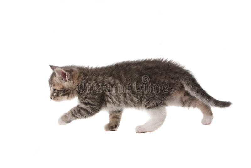 Download Small kitten stock image. Image of horizontal, playful - 17205337