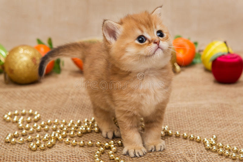 Small kitten and Christmas decoration royalty free stock photos