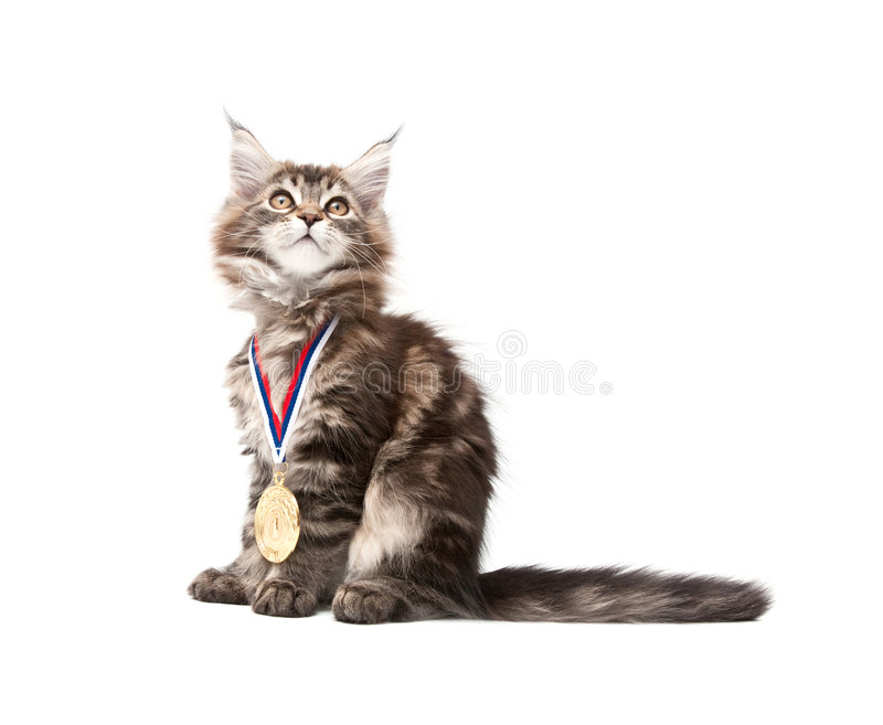 Small Kitten With Gold Medal Royalty Free Stock Images