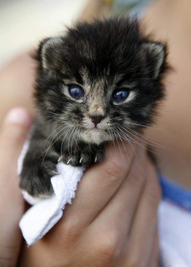 Small kitten in hand stock photos