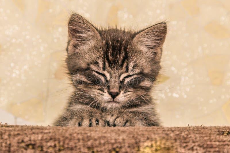 Small kitten lying on sofa. stock photos
