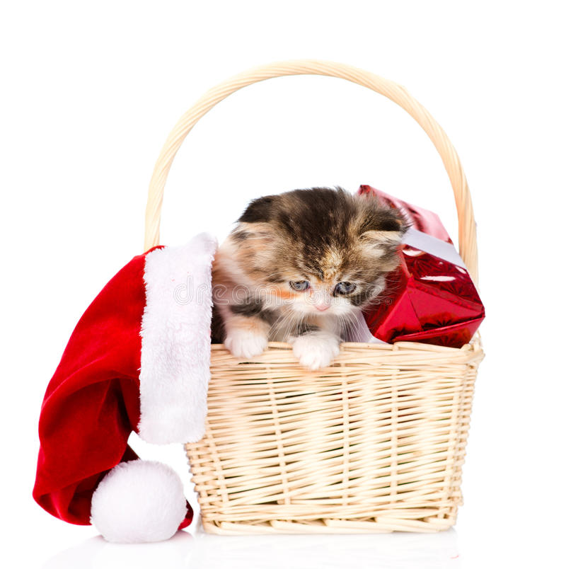 Small kitten with red hat and gift in basket. isolated on white royalty free stock photos