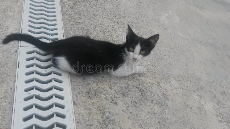 Small kitten scares of people stock photo