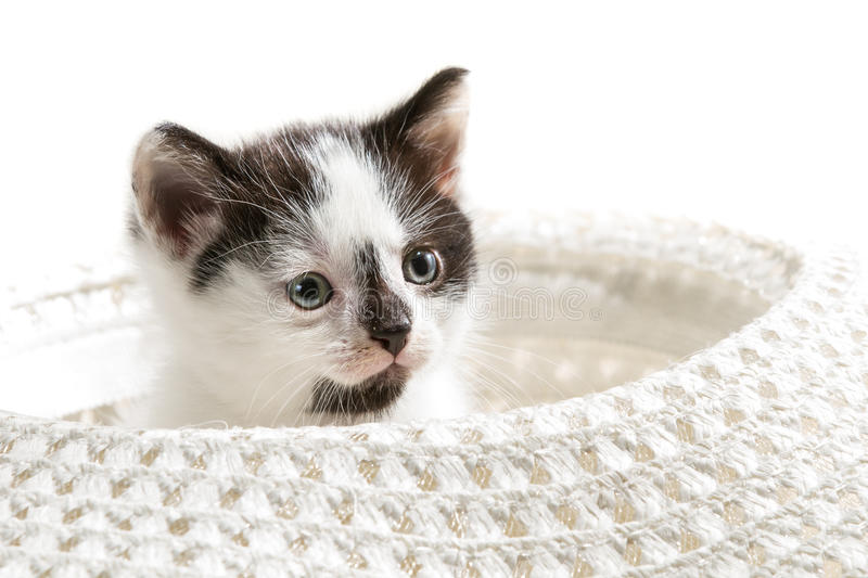 Small kitten sitting in a hat royalty free stock photo