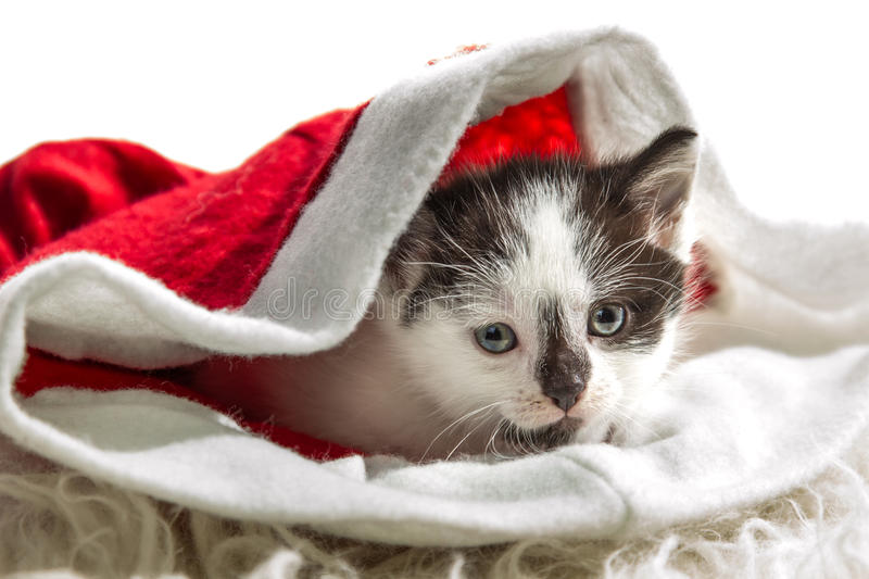 Small kitten sitting in a Santa Claus hat stock images