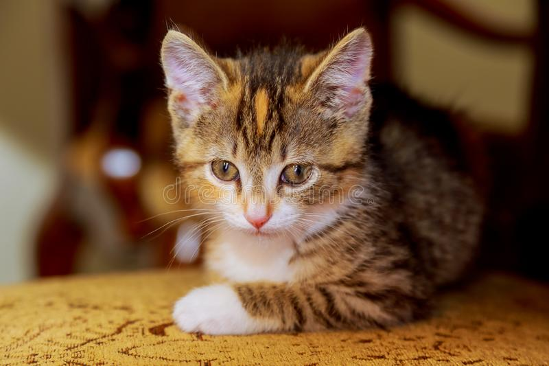 a small kitten sitting on wooden chair stock image