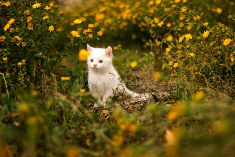 Small kitten walking in the grass. Pet cat stock photos