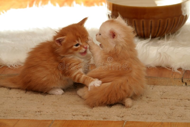 Download Small kittens stock photo. Image of kitty, little, eyes - 2318538