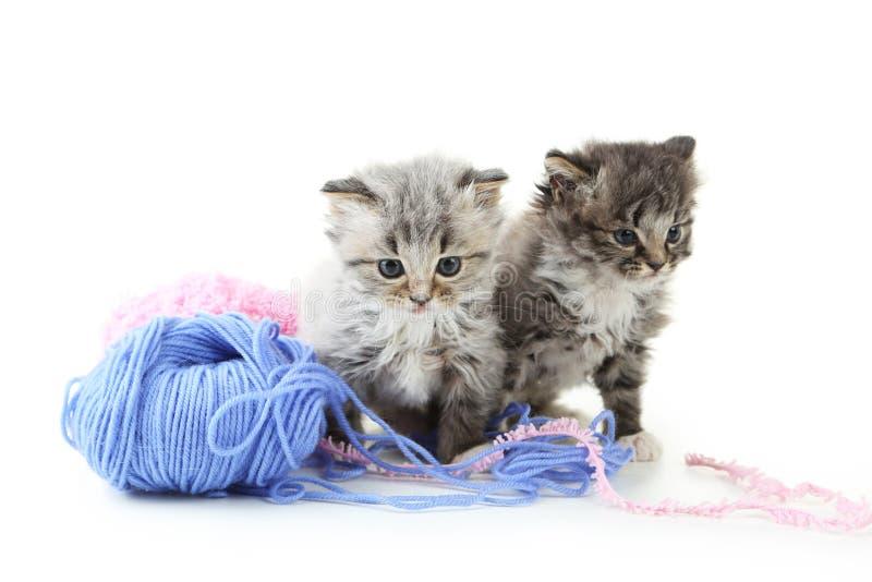Small kittens stock photos