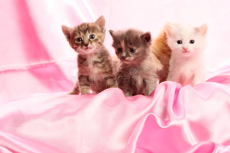 Small kittens on pink stock photos