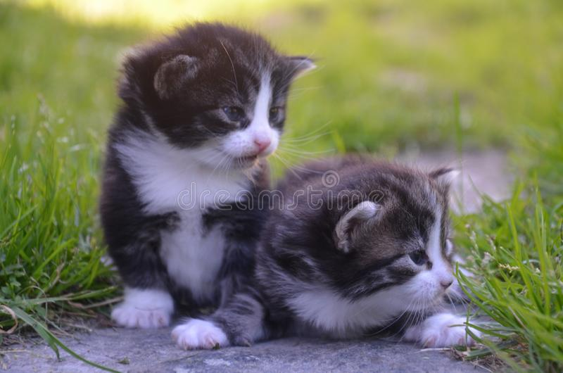 Small kittens sitting on lawn royalty free stock image
