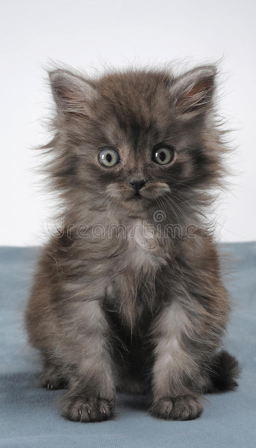 Free Small Kitty Stock Images - 9689424