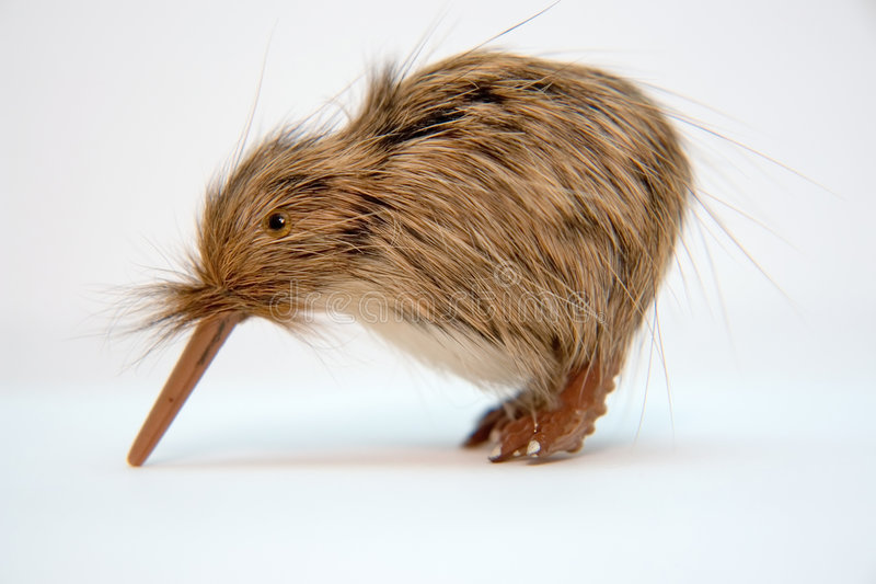 Small kiwi toy bird. On plain background royalty free stock photo
