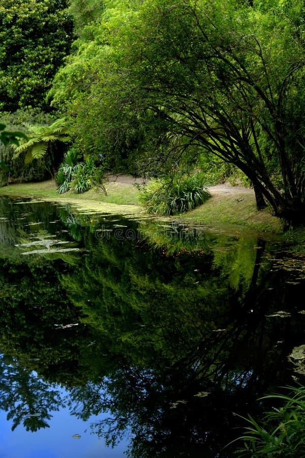 Small lake royalty free stock photography