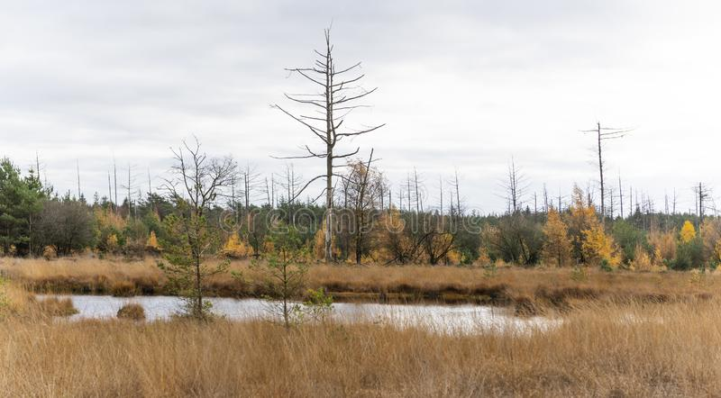 Small Lake in Drenthe Netherlands. Small lake in autumn with dead trees in National Park Dwingelderveld in the province of Drenthe, The Netherlands stock photos