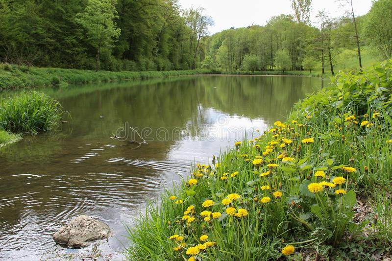A small lake in the spring stock photos
