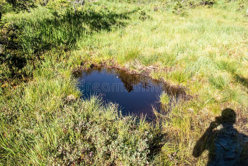 Small lake on upland moor with photographer shadow and grass in Sumava mountains stock image