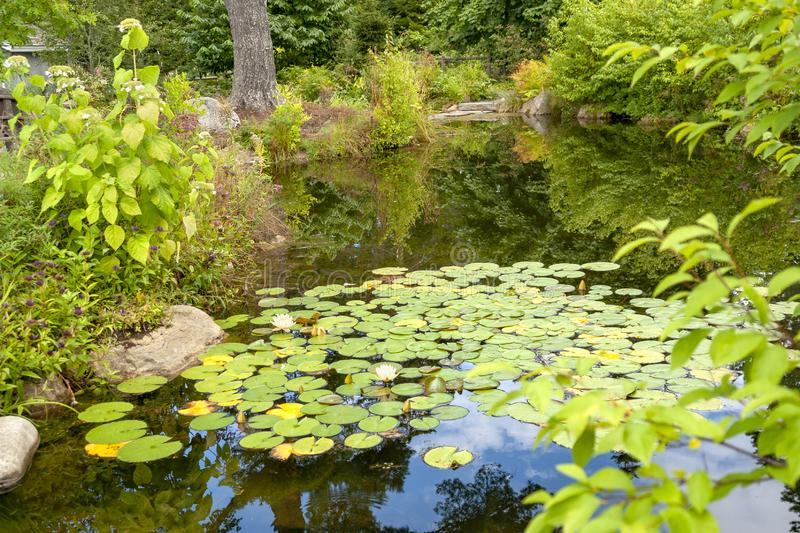 Small lake with water lily plants stock photo