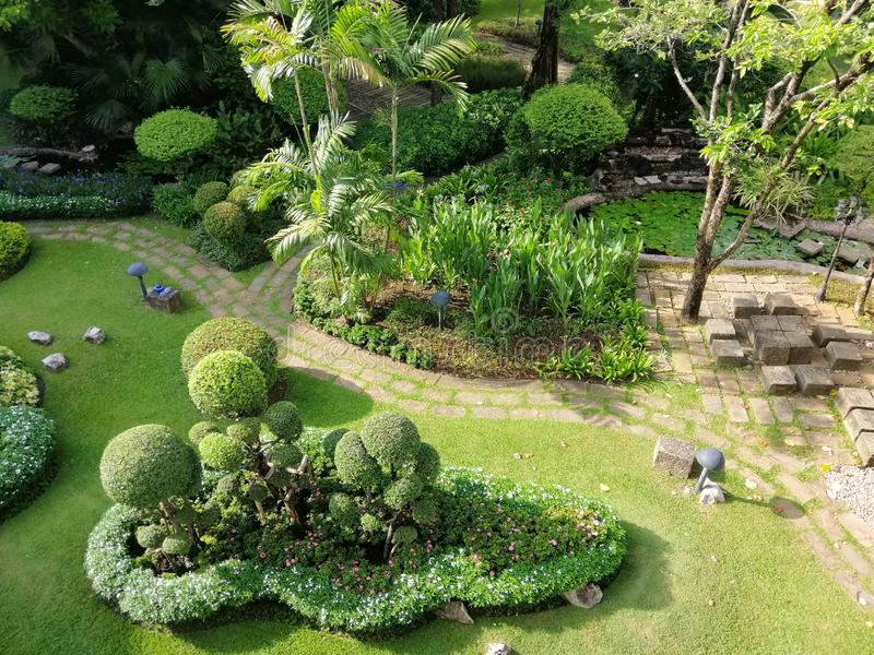 Small and large trees in gardens, public resting places, natural background images. stock image