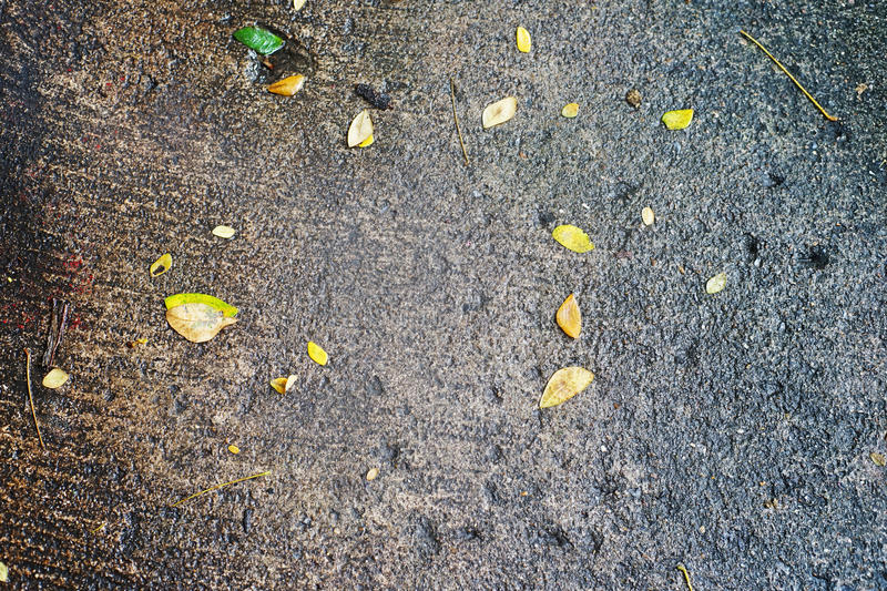Small leaf on wet concrete floor. After rain royalty free stock photo