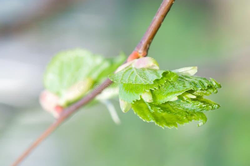 Small leafs