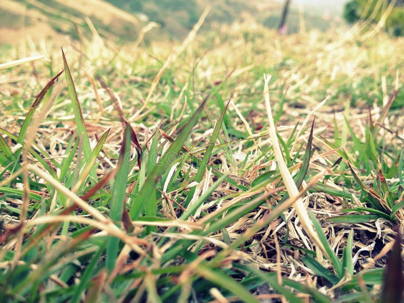 Small leafs of grass. A small area of grassland greenish in colour or having parts or marks that are greenish stock photos