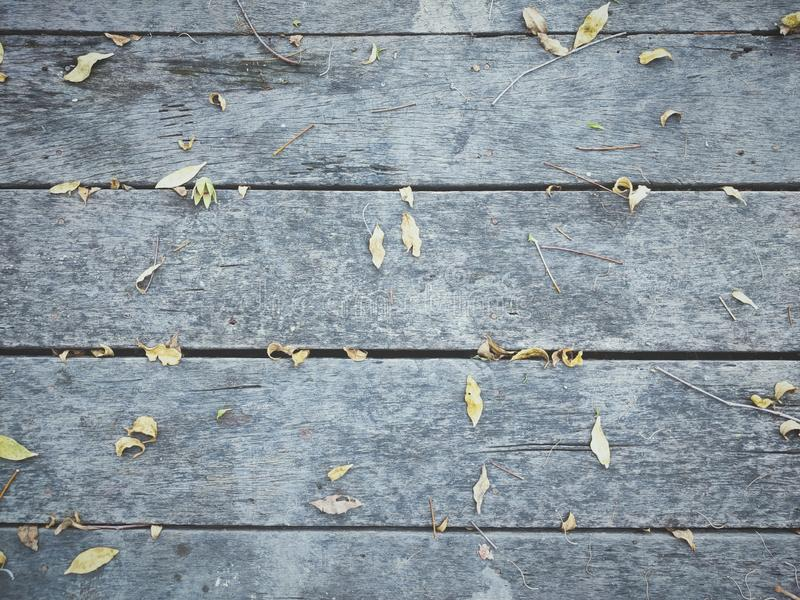 Small leaves fell on the wood floor. Dry, nature, outdoor, garden royalty free stock photo