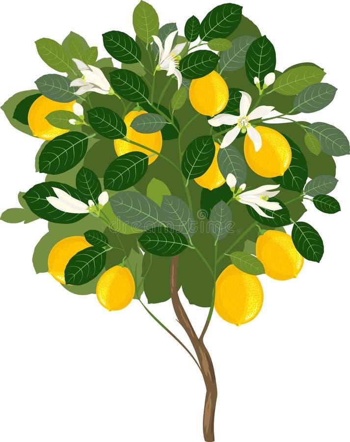 картинка лимонное дерево распечатать