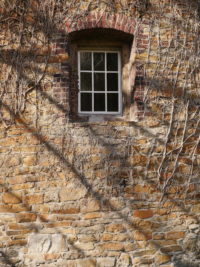 Small let in lattice window in thick brick mason. Ry. The masonry is overgrown with the leafless tendrils of a plant stock images