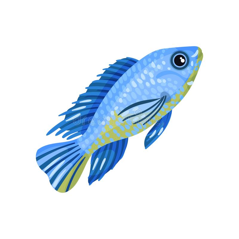 Small light blue fish. Vector illustration on white background. Small brilliant light blue fish with a yellow belly. Vector illustration on white background stock illustration