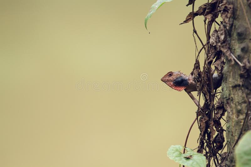 A small lizad on a tree. In the sunny day in summer by the lake royalty free stock photography