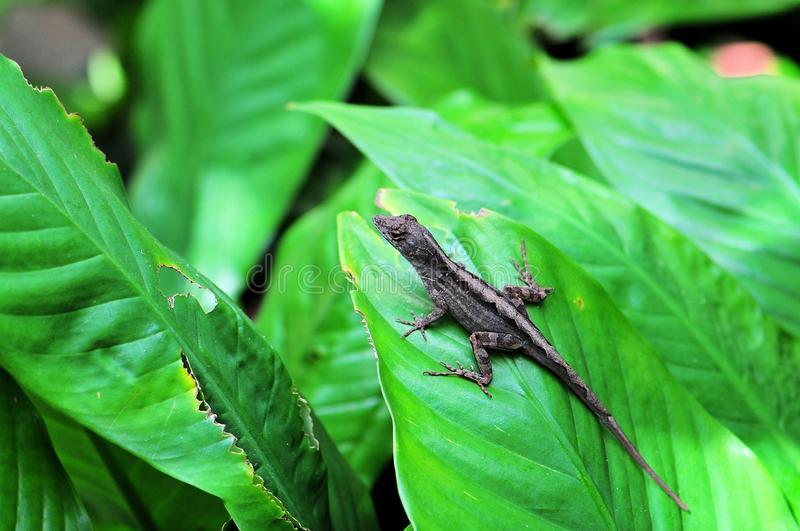 Download Small lizard stock photo. Image of color, nature, scale - 38259592