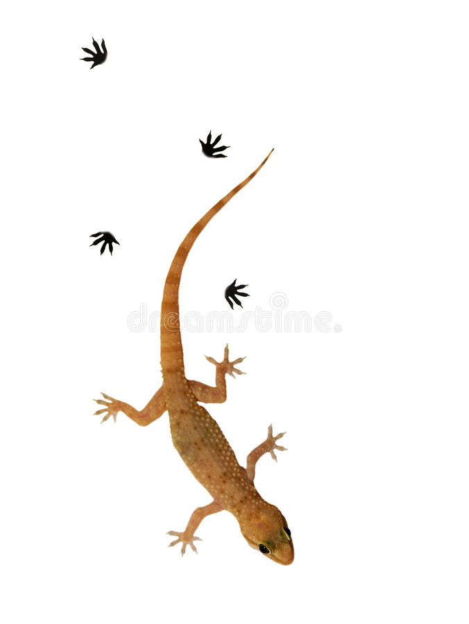 Free Small Lizard Stock Images - 7341784