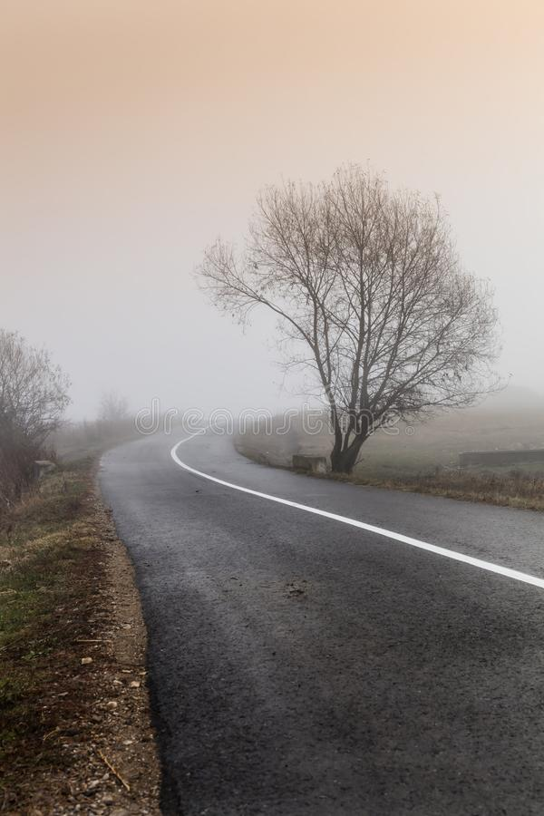 Small lonely provincial road with a tree, on a foggy morning near Sic village, Transylvania. Romania royalty free stock image
