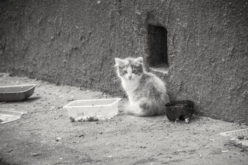 Small lovely kitten stock image
