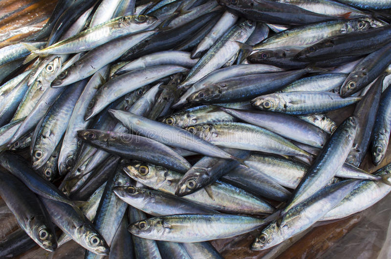 Small mackerel fishes on shop display. Pile of sea fishes for sell. Seaside fisherman catch. stock photo