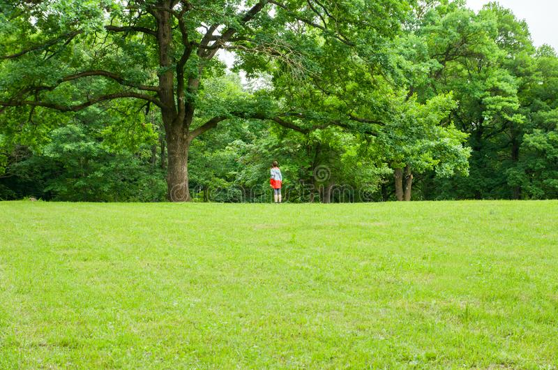 Small man and big oak tree on grass lawn, summer scene, outdoor royalty free stock image