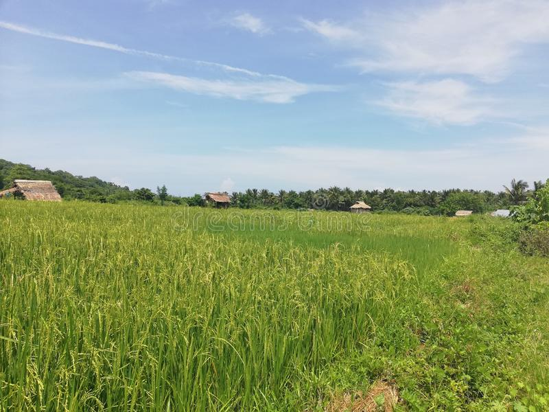 Small Mangyan village in hilly part of Abra de Ilog, Mindoro. Philippines, Southeast Asia; cultivation of land, rice field, fields and plantation; tiny royalty free stock photography