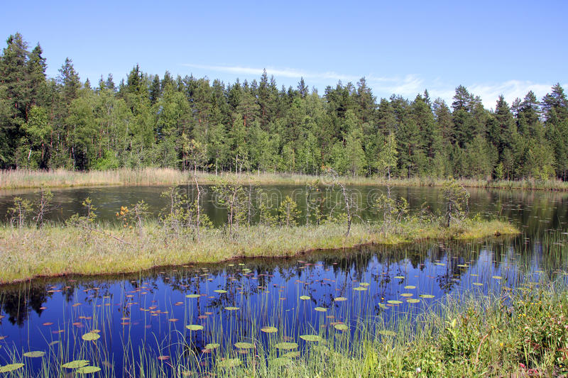 Small Marshland Lake in Finland royalty free stock photography