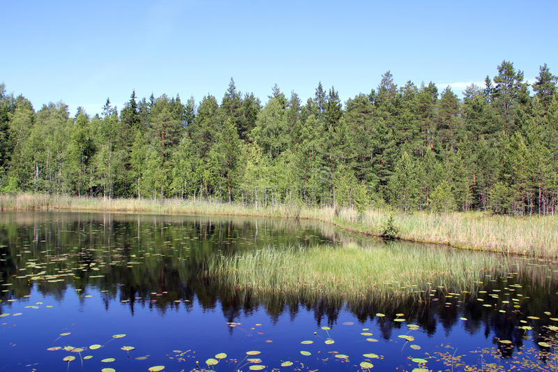 Small Marshland Lake in Finland stock images