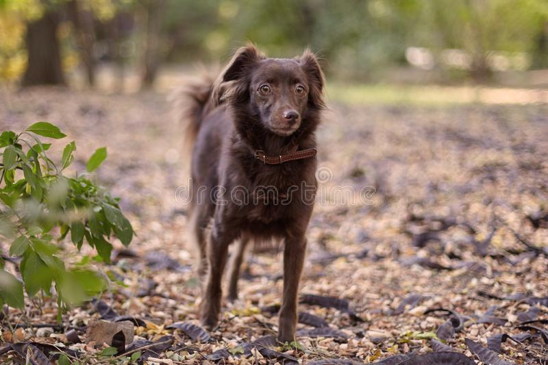 Small melancholy red brown dog mongrel stands on the ground at a middle of abandoned park. Outdoors, copy space stock images