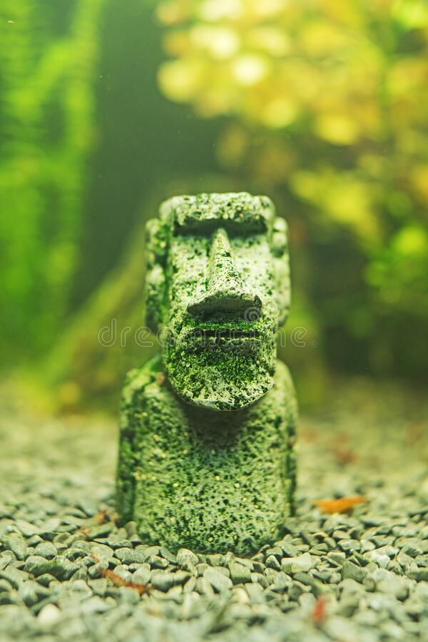 Small Moai statue. In the freshwater aquarium stock image