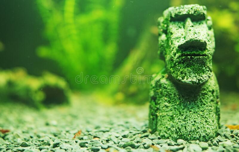 Small Moai statue. In the freshwater aquarium stock photos